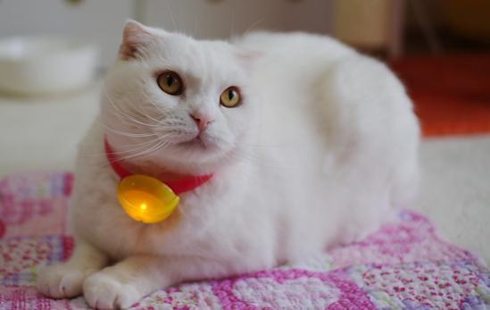 ハッピーセット ドラえもんの鈴の首輪をつけて猫