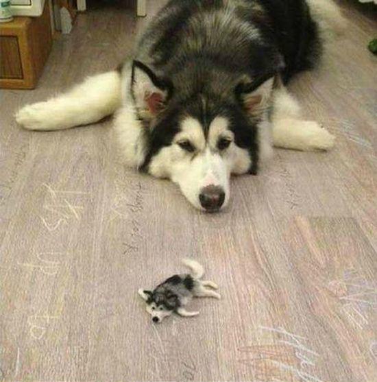 抜け毛で作った犬 その1